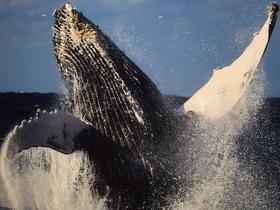 鯨写真展3.JPG