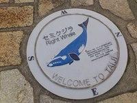 セミクジラ.JPG