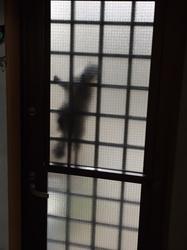 泥棒猫.JPG
