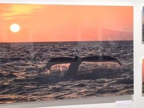 鯨写真展2.JPG