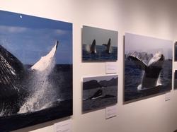 鯨写真展4.JPG